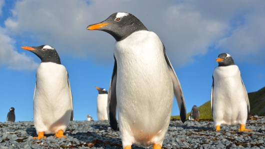 New scientific evidence suggests 'penguins might be aliens' based on their poop