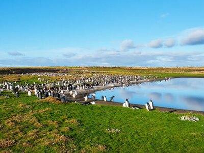 Image of Springtime in the Falkland Islands: What to expect