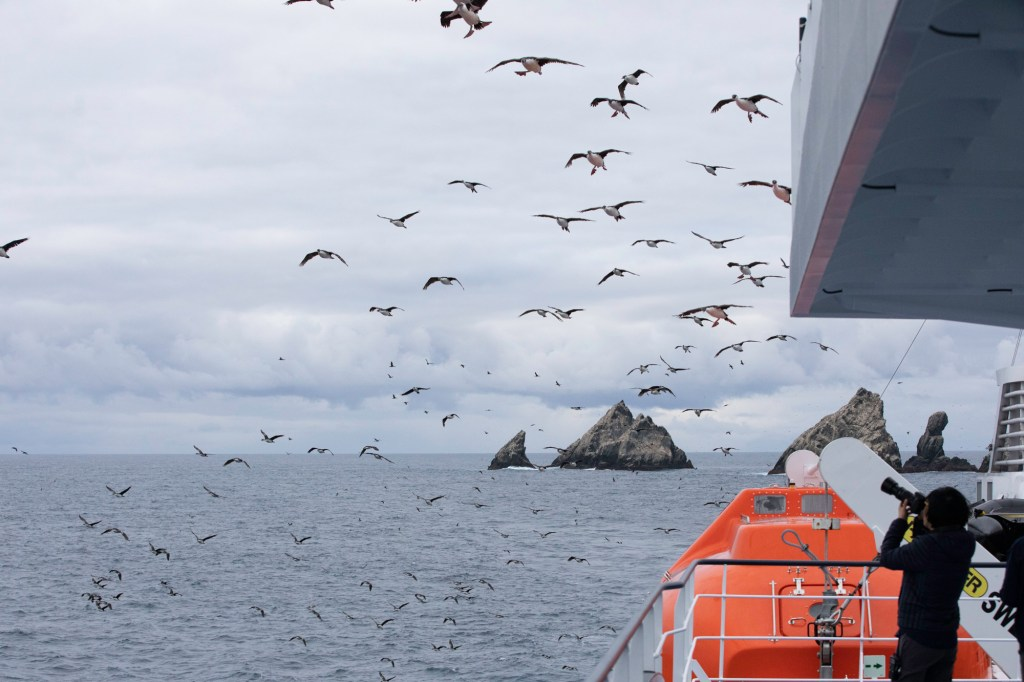 Bird watching from the ship. Photography by Keegan Pearson.