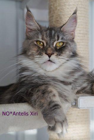 NO*Antelis Xiri 19.01.20