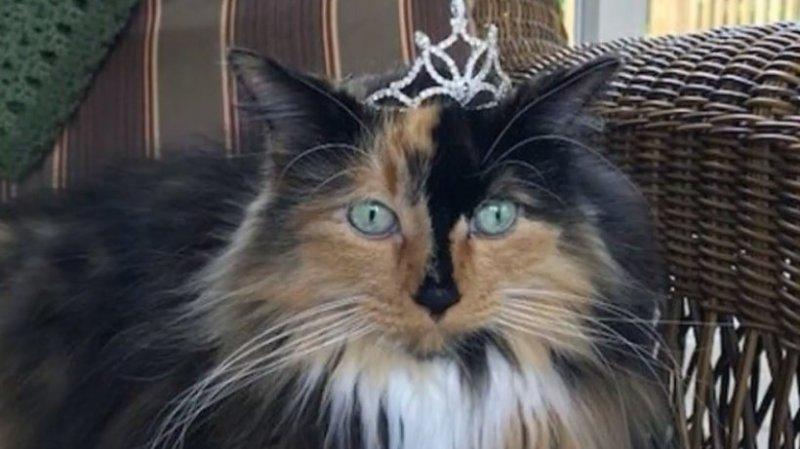 Orașul în care oamenii au ales o pisică pentru postul de primar 127