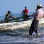 Augura año negro para el sector pesquero en Nayarit.