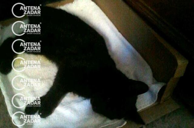 Otrovana mačka Bibinje 2