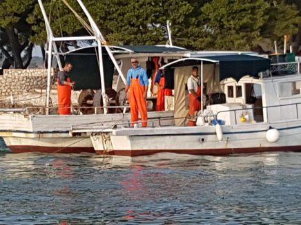 Ribari petrcane (2)