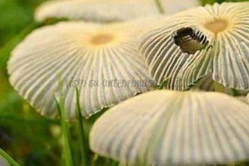 Festa dei Funghi e dell'Ambiente 2018 di Budoia foto