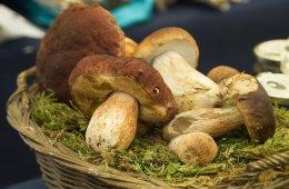 Festa della Castagna e Funghi a Follina
