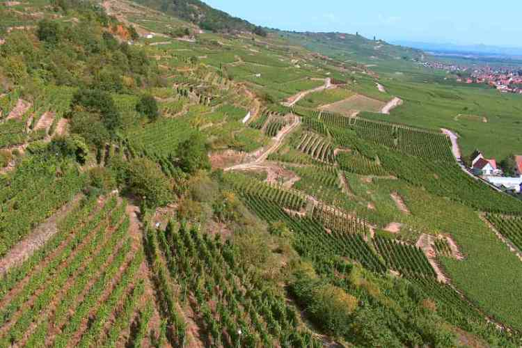 Alsace Crus et Terroirs, une belle initiative