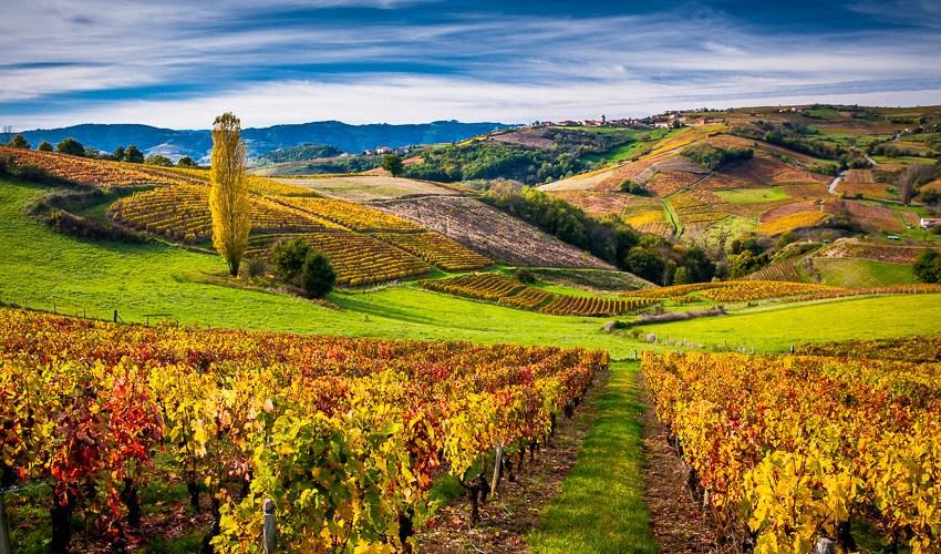 Neo vignerons en Beaujolais : Brouilly, Côtes-de-Brouilly et Chénas