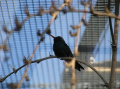 A bird at the botanical gardens in Tucson