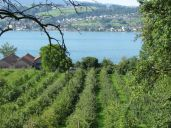 Lake Zurich from Uetikon am See