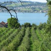 Lake Zurich from Uetikon am See