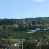 Vineyards checker the hills in Uetikon