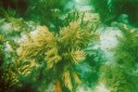 Florida_Keys_underwater1
