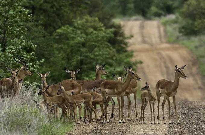 wild animals avoid the