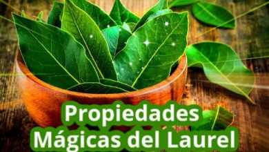 Photo of 5 Propiedades Mágicas del Laurel