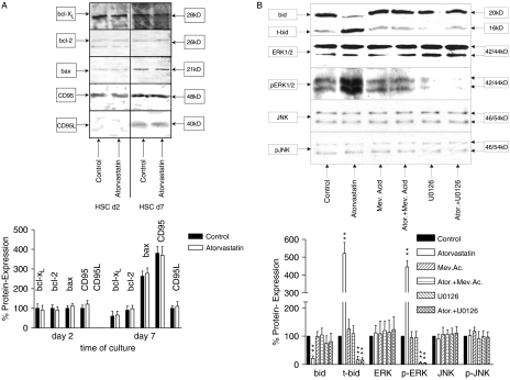 Atorvastatin induces apoptosis by a caspase 9 dependent