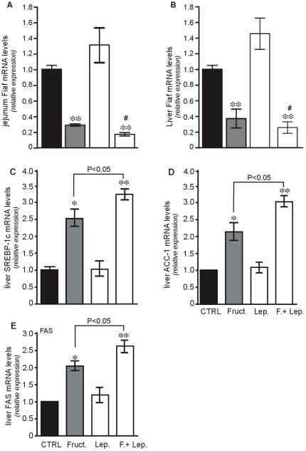 Positive Regulatory Control Loop between Gut Leptin and