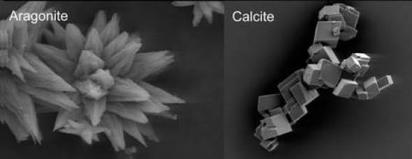 calcite_aragonite