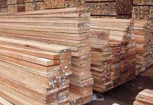 obat jamur permukaan kayu albasia