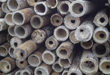 jamur permukaan bambu