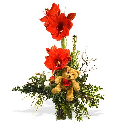 Blumengre zu Weihnachten bers Internet versenden  Blog ANNA Haus und Gartenblog