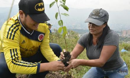 Sembratón de 100.000 árboles en Antioquia