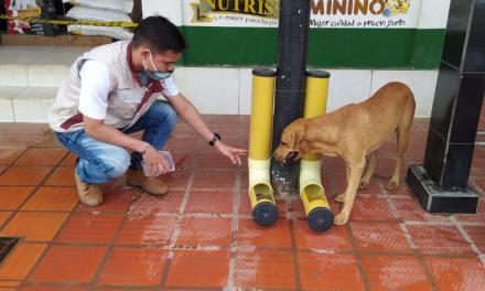 Nechí brinda comida a perritos sin hogar