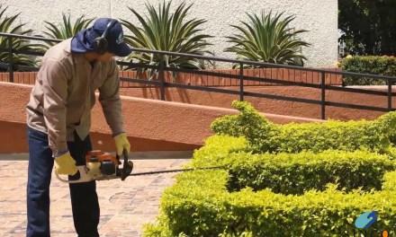 Mejoramiento de jardines urbanos en Rionegro