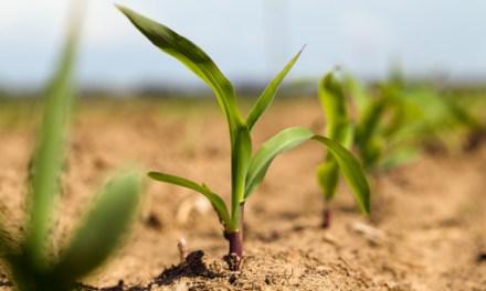 Maceo apoya el agro comercial