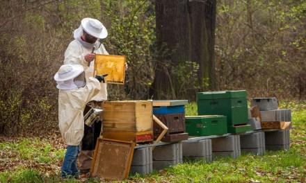 Crecimiento de la apicultura en Santo Domingo