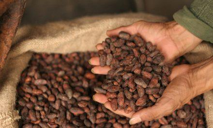 Cultivo ecológico de cacao en Puerto Triunfo