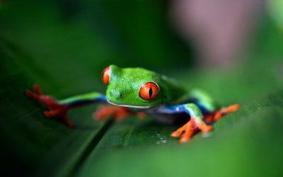 Talleres de biodiversidad y fauna silvestre en Granada
