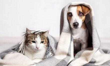 Adoptar una mascota como acción transformadora