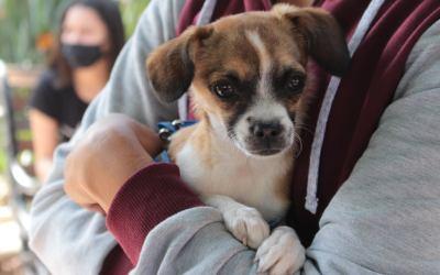 Yalí brinda atención veterinaria para las mascotas