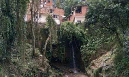 Amagá protege sus fuentes hídricas