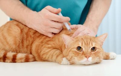 Segunda jornada de vacunación canina y felina en Heliconia