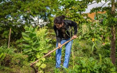 Girardota vive la agricultura urbana