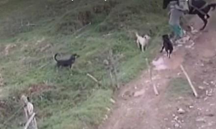 Caso de maltrato animal en Santa Rosa de Osos, Antioquia
