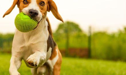Nuevo parque canino en Laureles