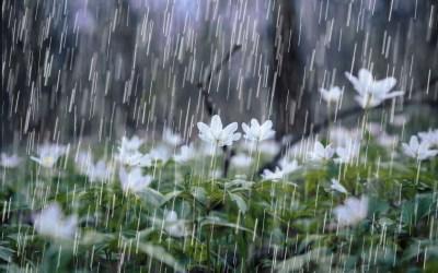 Cinco municipios del Oriente reportan afectaciones por las lluvias