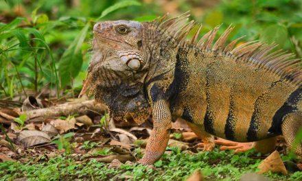 Durante la Semana Santa se protegerá la biodiversidad en Antioquia