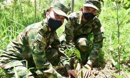 En Támesis, sembraron 7.000 árboles nativos