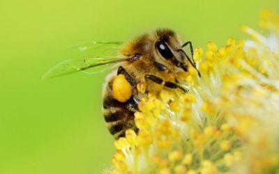 En San Rafael familias campesinas trabajan para la protección de abejas
