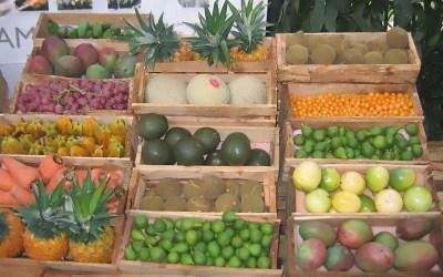 Abastecimiento de alimentos agrícolas y procesados continúan funcionando con normalidad en Antioquia