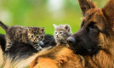 El bienestar animal es protagonista en Liborina