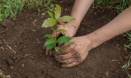Itagüí sembró 300 árboles en memoria de las víctimas de covid-19