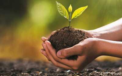 En el departamento se llevó a cabo una alianza para sembrar 3 millones de árboles