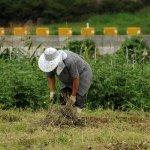 Programa de fortalecimiento productivo rural en Caicedo