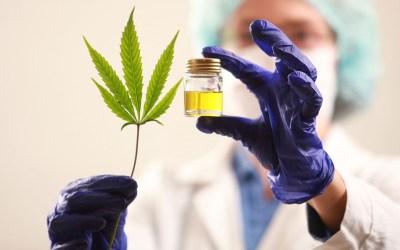 Sensibilización sobre el Cannabis Medicinal en Dabeiba
