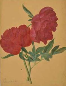 Botanical watercolour at LAPADA